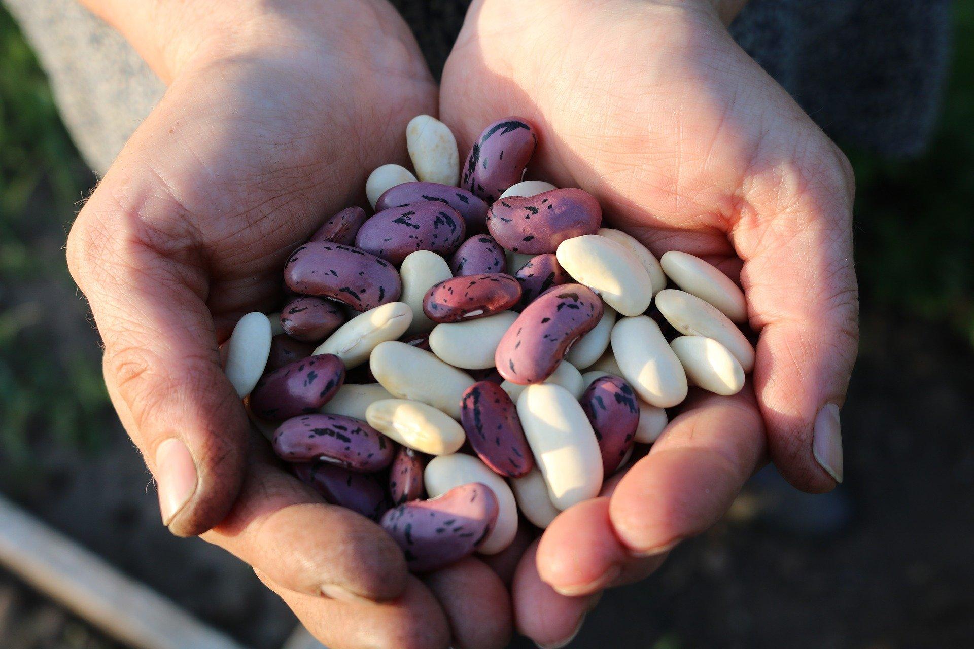 legumbres proteina vegetal
